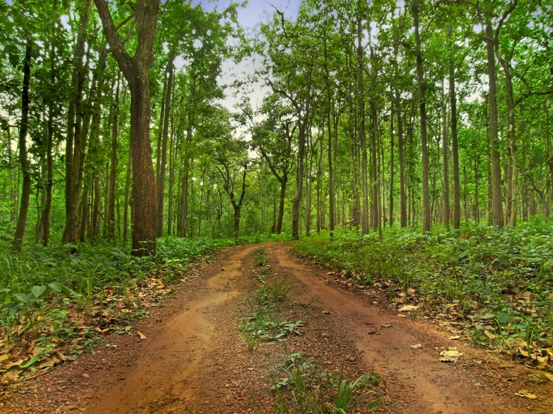 Odisha Forest Tours