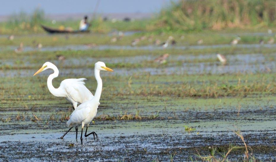 Eco Tourism in Odisha